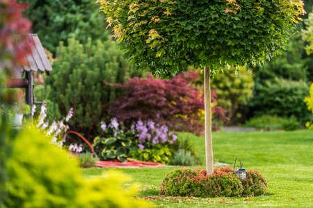 Beautiful Backyard Garden and the Summer Vegetation. Gardening and Nature Theme