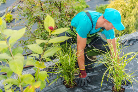 Caucasian Men in His 40s Planting New Plants and Flowers in His Backyard Garden. Gardening and Landscaping Theme.