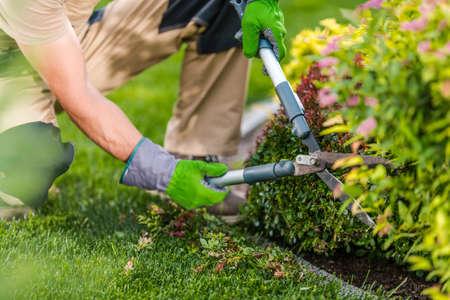 Caucasian Professional Gardener with Sharp Scissors Trimming Backyard Plants During Spring Maintenance.