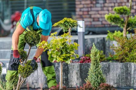 Residential Garden Maintenance by Professional Gardener. Men in His 40s and Seasonal Trimming Trees and Plants.