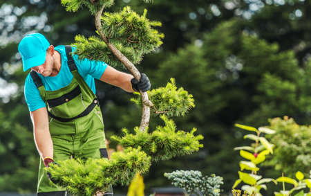 Professional Gardener Checking Garden Tree Health Looking on Branches. Gardening and Landscaping Theme.