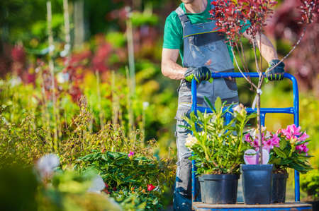 Caucasian Gardener and Garden Market Store Shopping with Large Cart. Landscaping Industry.