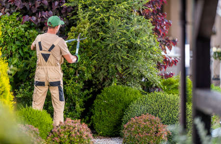 Professional Garden Worker in His 40s Trimming Decorative Trees Inside Large and Beautiful Mature Residential Garden. Imagens