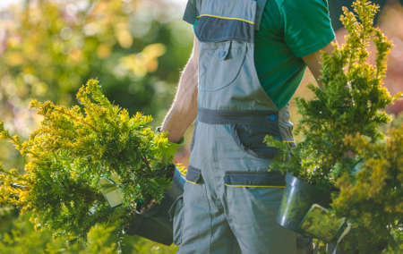 Spring Time Plants Planting. Caucasian Gardener with Two Decorative Trees in His Hands. Gardening and Landscaping Industry.