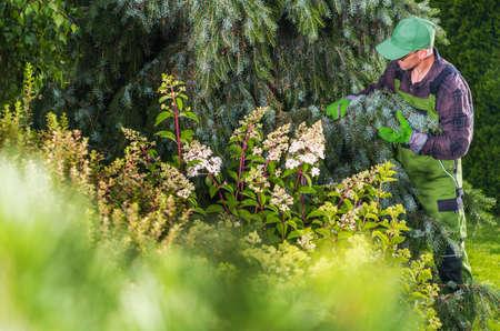 Garden Plants Health Check Performed by Caucasian Professional Gardener.