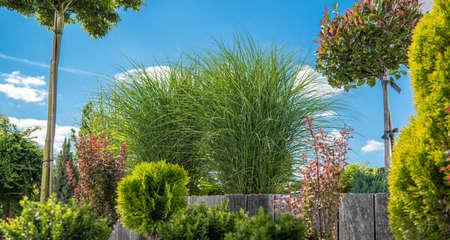 Residential Backyard Garden Rockery Plants Summer Vegetation. Nature Theme. Фото со стока