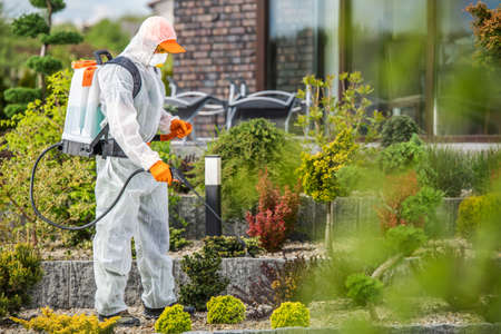 Garden in Protection Suit Spraying Garden Plants with Active Chemicals. Insecticide and Fungicide Job. Фото со стока