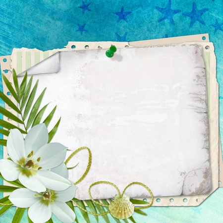 docket: Beach postcard with sea shell and star fish