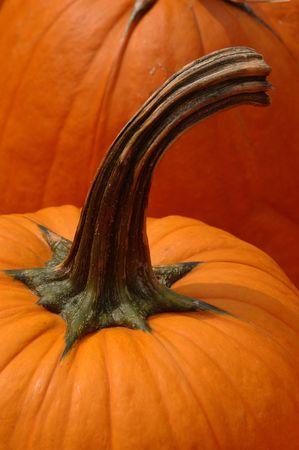 Close-up of pumpkin stem and stem Banco de Imagens