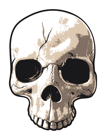 Realistic Upper Portion of Human Skull Illustration