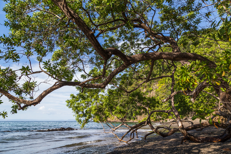 The black volcanic sands of Playa Matapalo is the only thing dividing the Pacific Ocean with the vast dry forest.