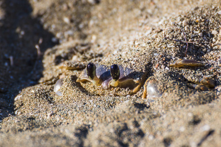 despacio: Once Id passed this crab I crouched down & paused as I waited for him to surface from his instantly made den in the sand.He did so slowly revealing his legs two by two before scurrying off in search of food.