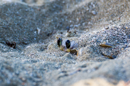 what if: The eyes of a sand crab are all that can be seen of this adult as he hides from predators on the beach at Yaguanabo in Cuba.I had photographed crabs on beaches in Cuba before so I knew what to look for & when, but if I hadnt, I doubt I would of spotted t