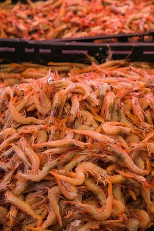 A pile of freshly caught shrimps from the Adriatic Sea pictured on a stall for sale at the fish market in Split one morning. Stock Photo