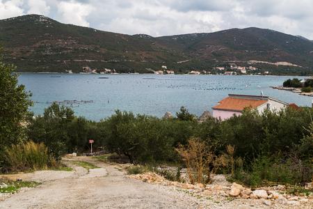 クロアチアの Peljesac 半島に守られた Maloston 湾のムール貝農場に向かって Brijesta の成長オリーブを通してトラックを見下ろします。 写真素材
