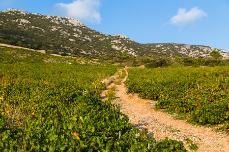 A dirt track weaves through a pretty vineyard on the outskirts of Trstenik - a famous wine growing region of Croatia.