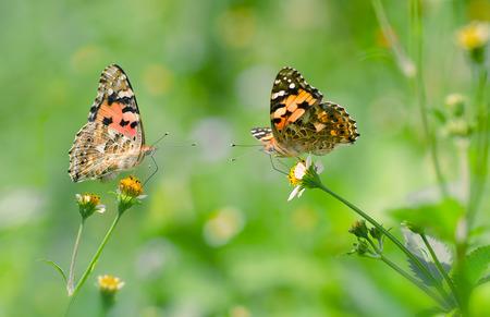 Beatiful butterflies
