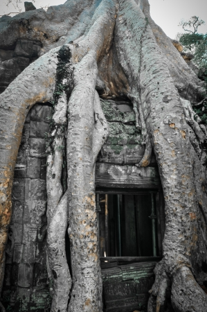 Ta Prohm is the modern name of a temple at Angkor, Siem Reap Province, Cambodia, built in the Bayon style largely in the late 12th and early 13th centuries and originally called Rajavihara photo