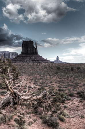 Monument Valley with some wood in foreground. Stock Photo