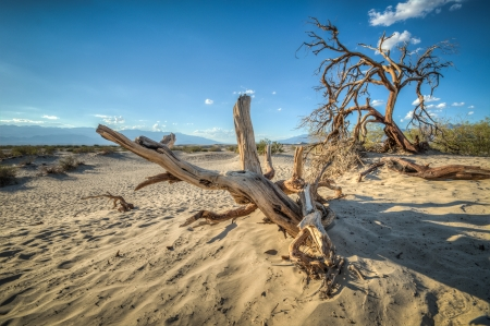 Death Valley dunes california at sunset and a wood piece photo