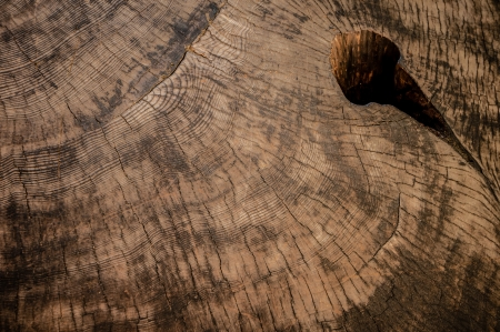 big Sequoia wood texture from national park in california photo