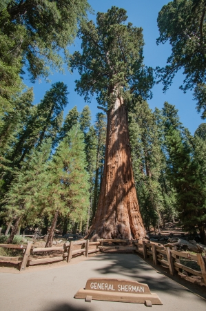 Sequoia national park Geneal Sherman tree photo