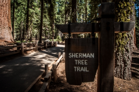 sherman tree trail Sequoia national park photo
