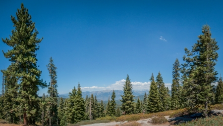 Sequoia forest panoramic view in national park california photo