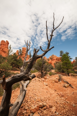 dry branch Bryce Canyon west USA utah photo