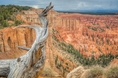 Canyon Bryce at rain amphitheater west USA utah 2013 photo