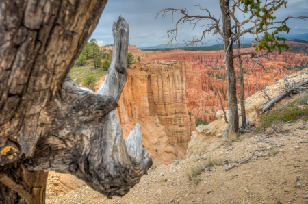 Canyon Bryce wood in foreground amphitheater west USA utah 2013 photo