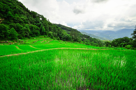 Rice terraces in highlands of southeastern China, farmhouses, ethnic village. Rice terraces rice paddies Asia, peasant village in mountains China. photo