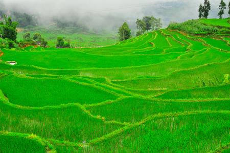 Terrazas De Arroz En Las Tierras Altas Del Sureste De China