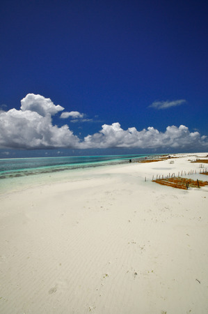 Zanzibar beach and coral rocks blue ocean Tanzania photo