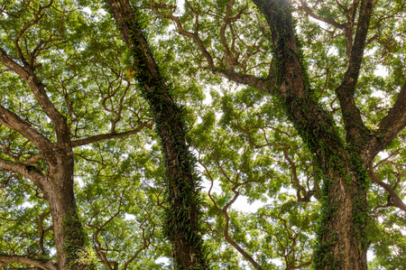 jungle forest tree. nature green wood sunlight backgrounds, Chiang Rai province, northern Thailand photo