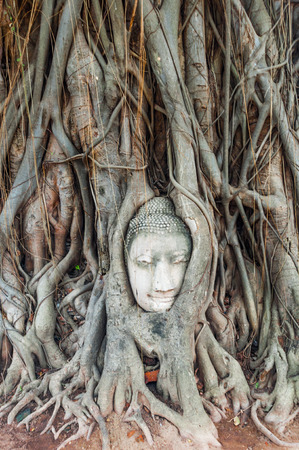 ayuttaya: Head of ancient Buddha surrounded by the roots of a tree of Wat Mahatat in Ayuttaya, Thailand Stock Photo