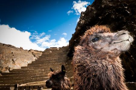 pisac: Terraces of Pisac in Urubamba valley near Cusco (Peru) south america