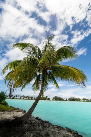 bora: Palm Bora Bora island French Polynesia 2016