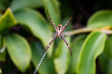 arachnophobia animal bite: spider hanging around in a net