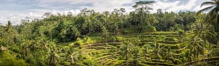 padi: Padi Terrace, Bali, Indonesia - Local plantation of the layered rice terrace in Bali Island, Indonesia.