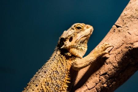 Lizards crawling tree Stock Photo