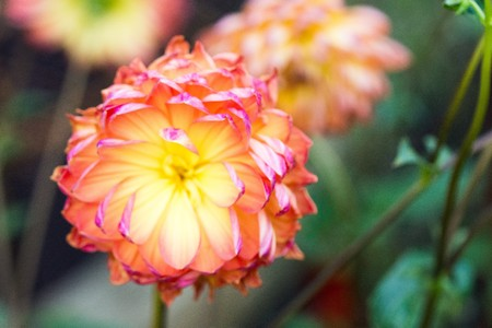 Flowers in beatuful colors close up singapore 2016