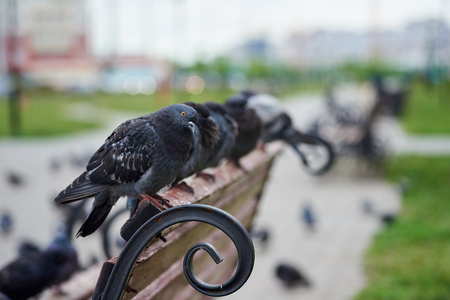 A few pigeons on the bench