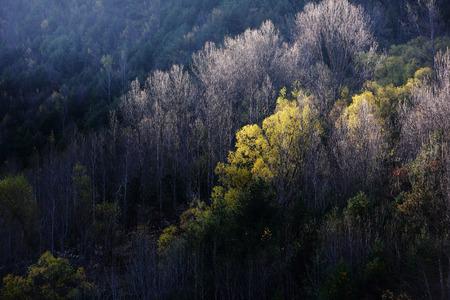 tint: Autumn forest Stock Photo