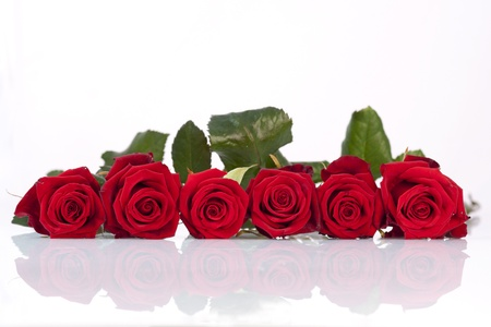 Line of red roses on a white background photo