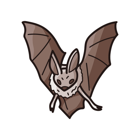 cartoon vampire: bat doodle Illustration
