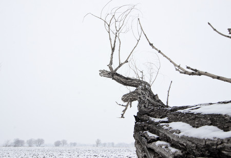perseverance: tree with the snow