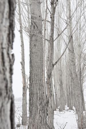 vigorous: Tree in winter