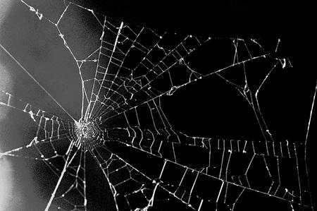 spiderweb: Spiderweb black background