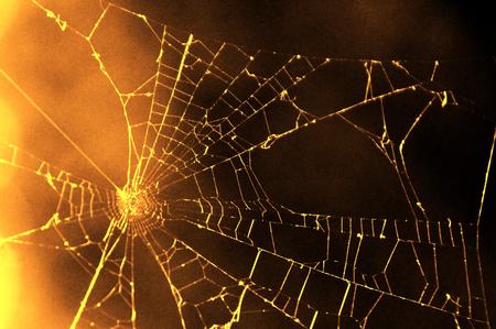 spiderweb: Spiderweb golden background Stock Photo